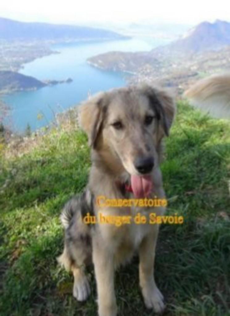 Site consacré à l'activité chien visiteur, conseils