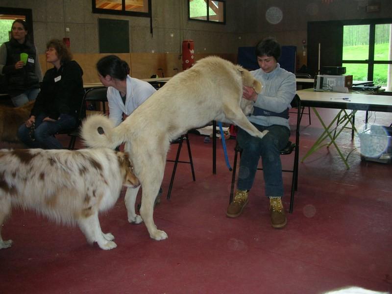 Site de rencontre maitre chien