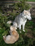 Golden Retriever et Husky 180330